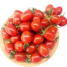 御贤果园 玲珑小番茄 3斤